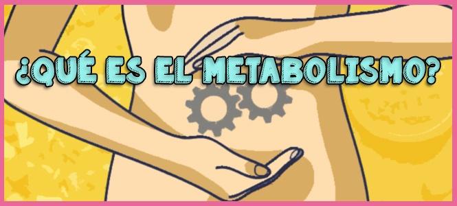 como funciona el metabolismo