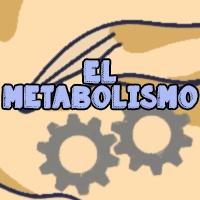 como acelerar metabolismo
